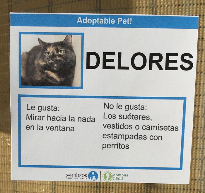 delores descripción gatito en adopción