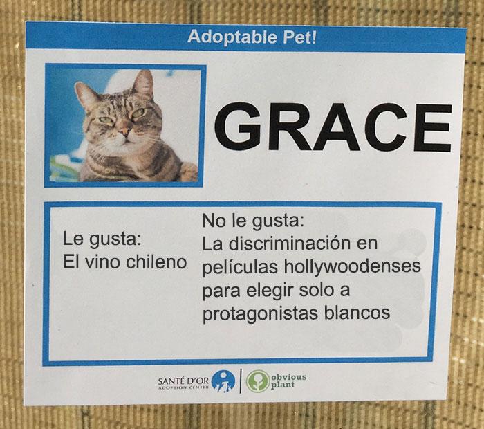 grace descripción gatito en adopción
