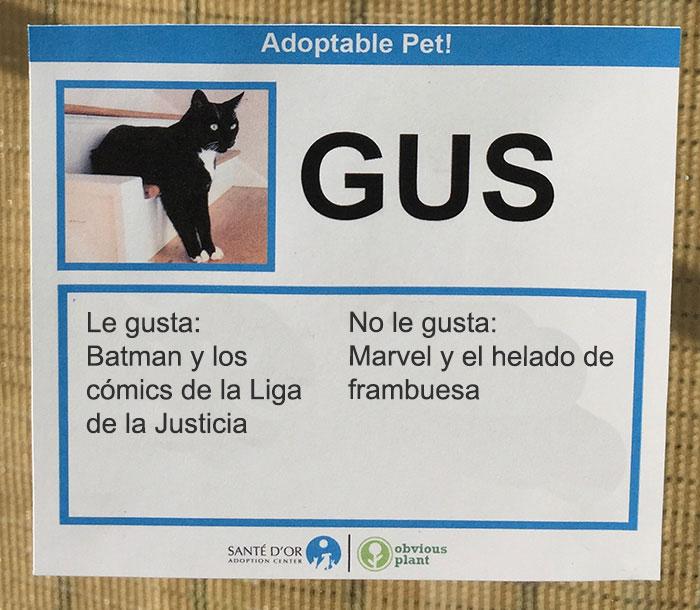 gus descripción gatito en adopción