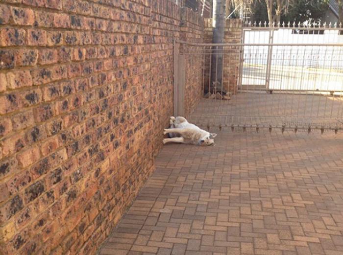 perro acostado sentado perspectiva