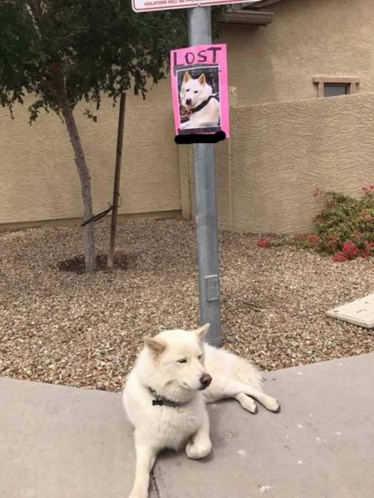 perro perdido falsa alarma