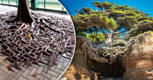 Cover árboles que demostraron que ninguna adversidad pueden contra ellos