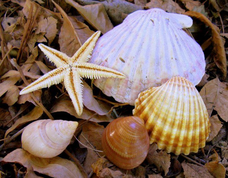 conchitas de mar decoración hogar suerte