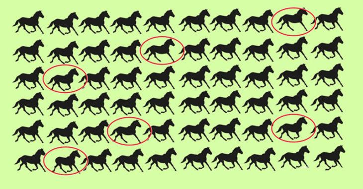 solución encuentra a los caballos