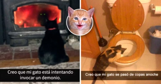 Cover Snapchats de gatos que te harán maullar de la risa