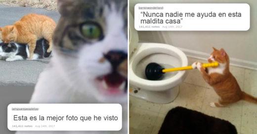 Cover Mensajes de gatos en Tumblr con los que es imposible no reír
