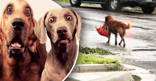 Cover Perro se hace con un saco de pienso después del huracán Harvey