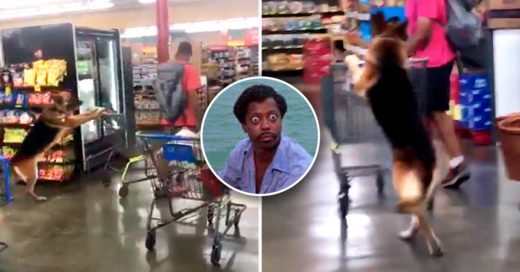 Cover Perro va de compras al supermercado
