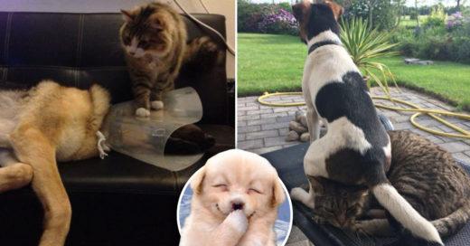 Cover Gatos y perros jugándose las bromas más pesadas
