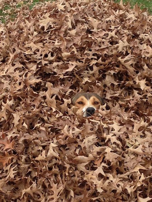 perro scondido profesor