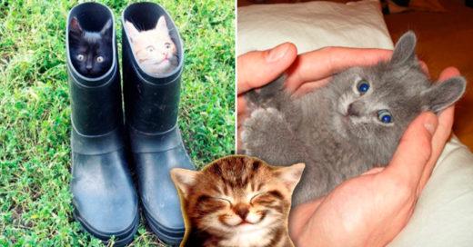 Cover tiernas razones para tener un gato en tu vida