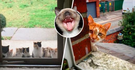 Cover Personas que no pensaban tener gatos pero los gatos les llegaron solos