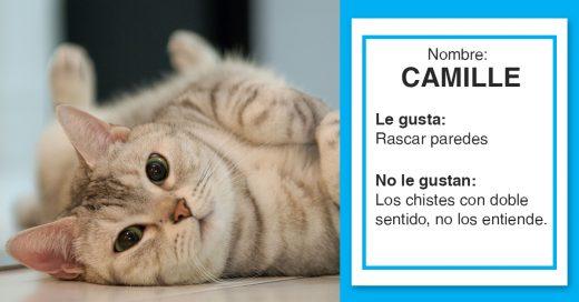 Cover Los gatitos más divertidos que conocerás hoy, están buscando familia