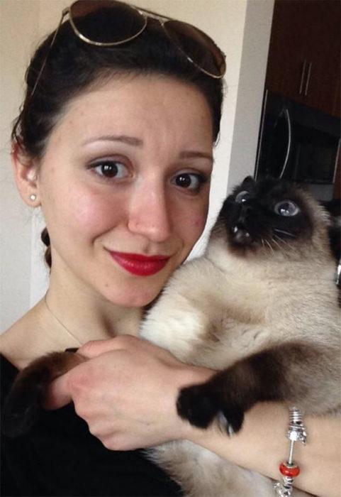Gatos que se muestran enojados por una selfie