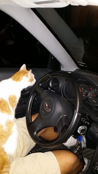 gato auto intruso