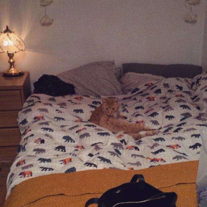gato apareció en la cama ricitos de oro