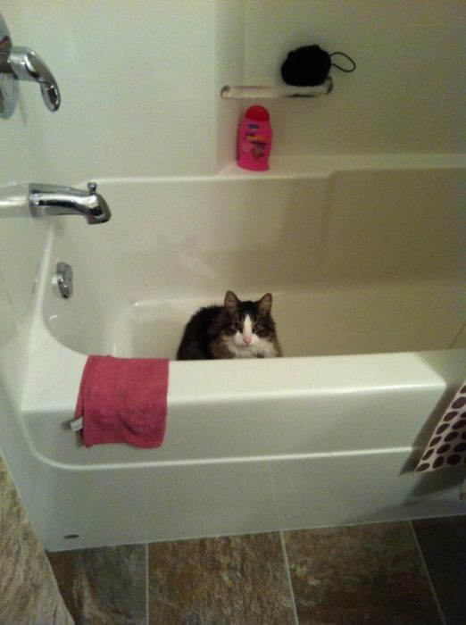 gato bañera intruso