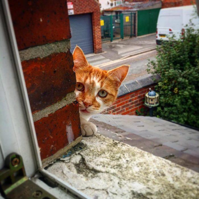 gato asomandose