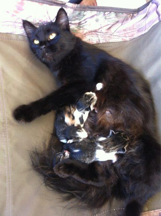 gata preñada crías