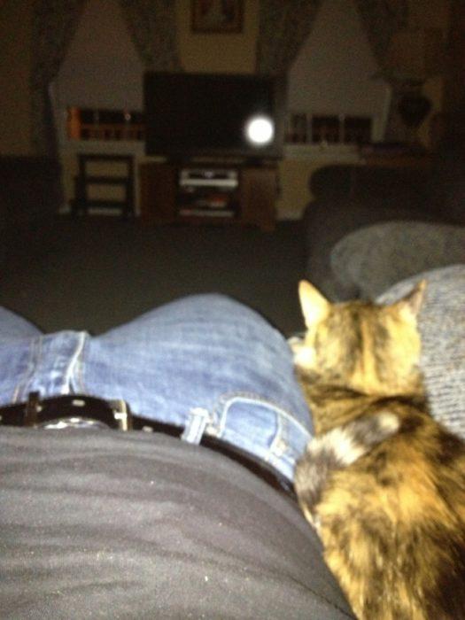 gato viendo la televisión
