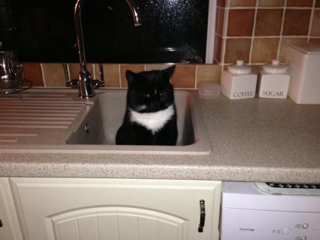 gato acostado en el lava platos