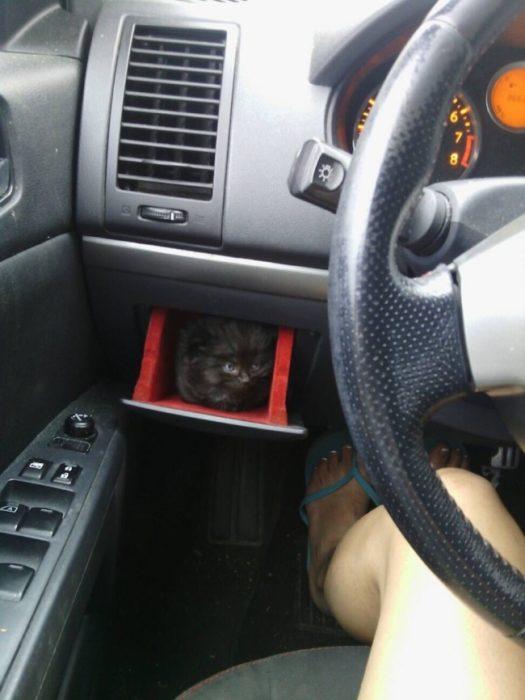 gato escondido en el auto