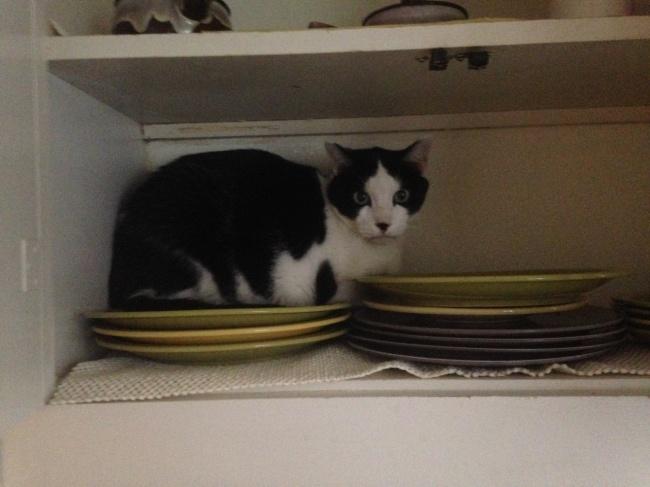 gato entre platos