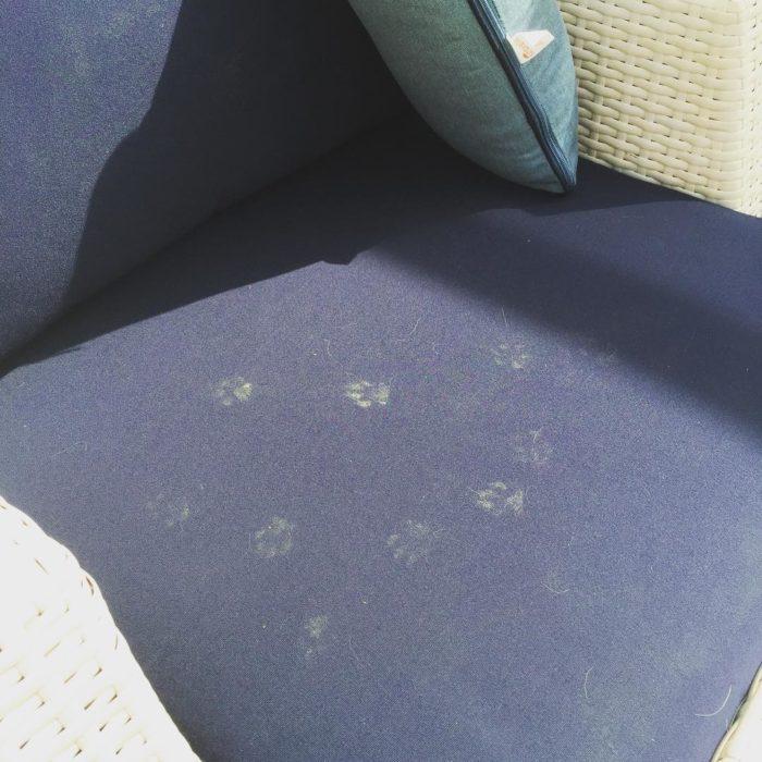 huellitas de gato sillón
