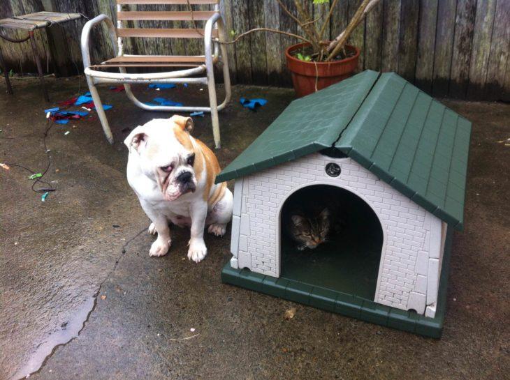 perro sentado en su casa