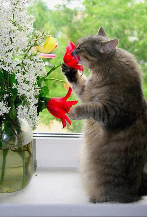 Gatos tiernos oler flores