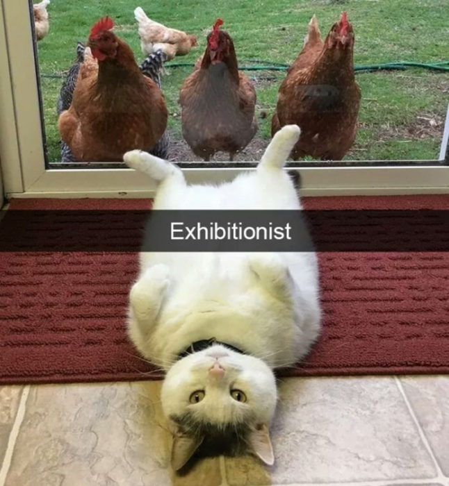 Gatos tiernos coqueto