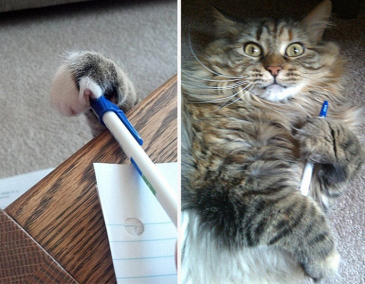 Gatos tiernos poeta secreto