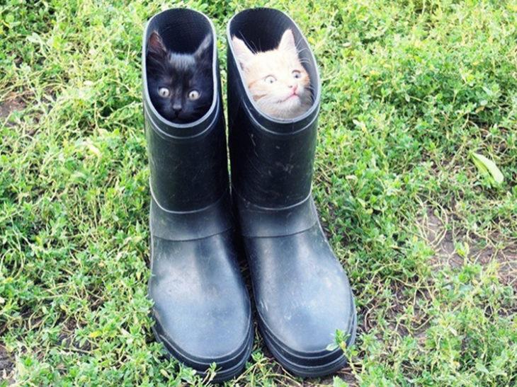 Gatos tiernos negro y blanco escondidos en botas