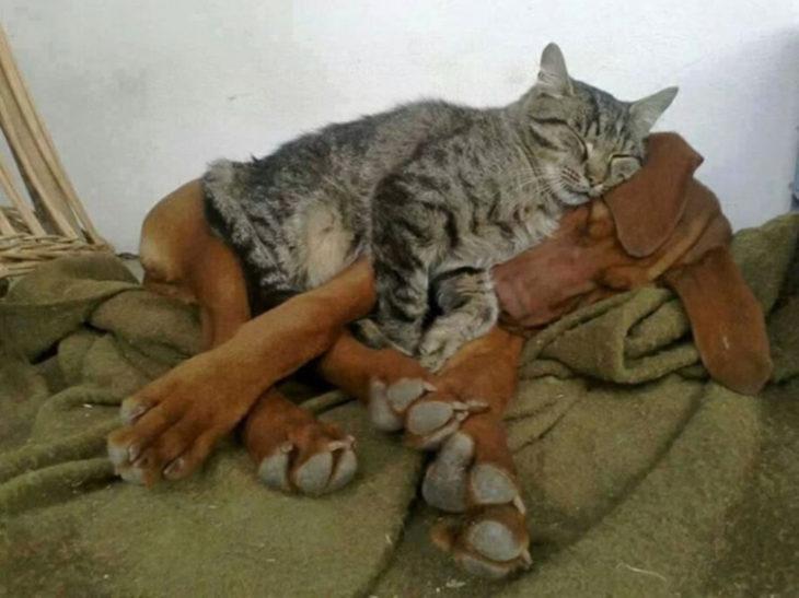 Gatos tiernos abrazo perruno
