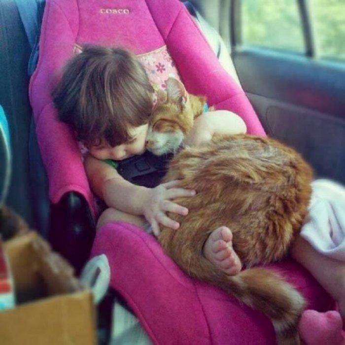 Gatos tiernos abrazo tierno
