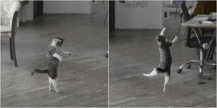 Gatos tiernos bailando solo
