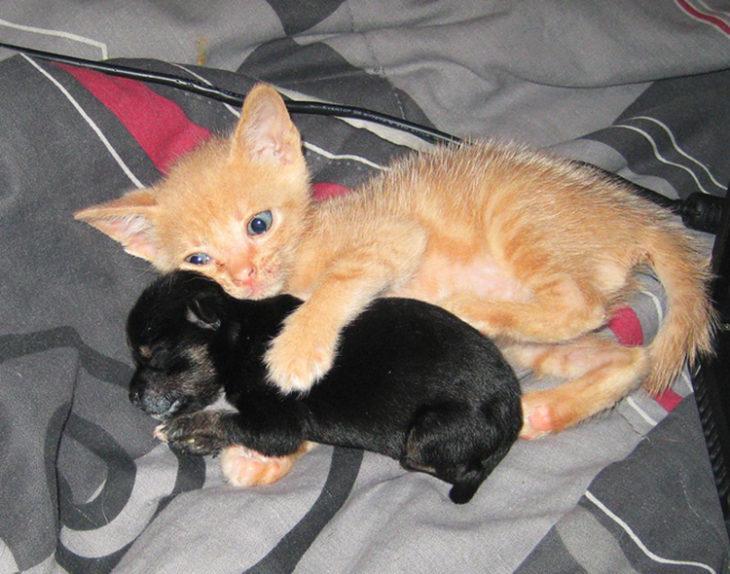 Gatos tiernos abrazando a perrito