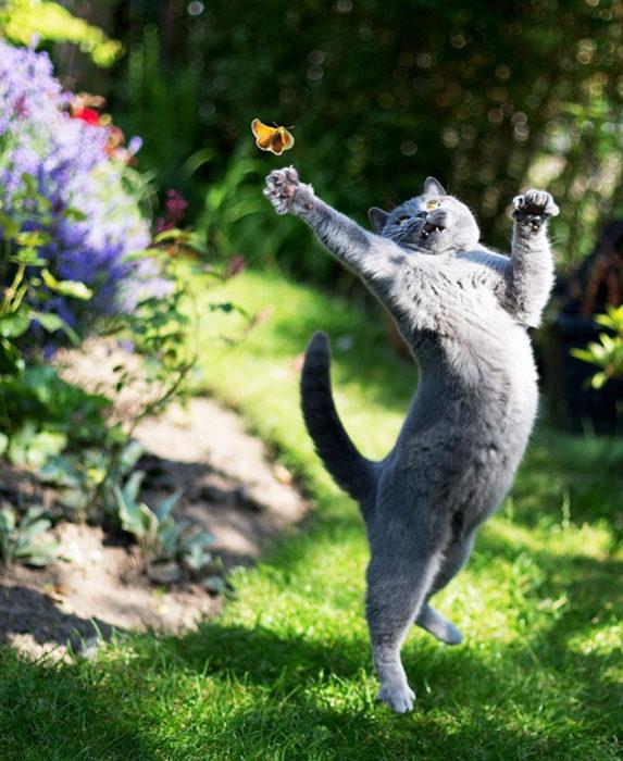 Gatos tiernos bailando en el jardín