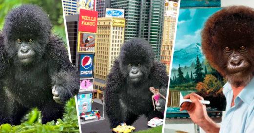 Cover Bebé gorila desata una divertida batalla de Photoshop