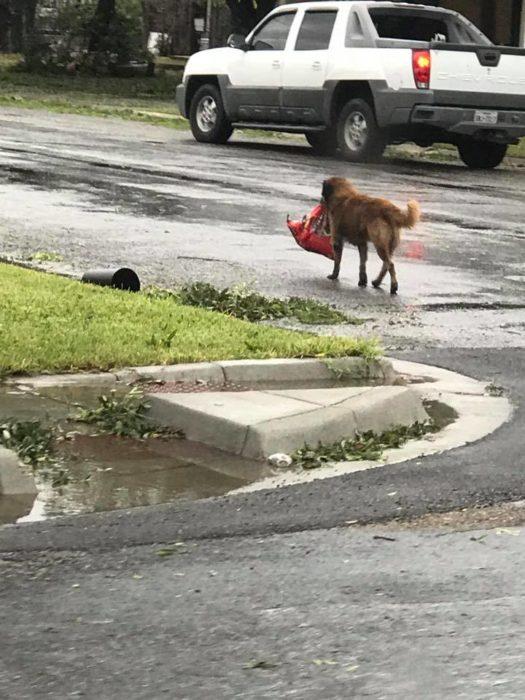 huracán harvey perro croquetas