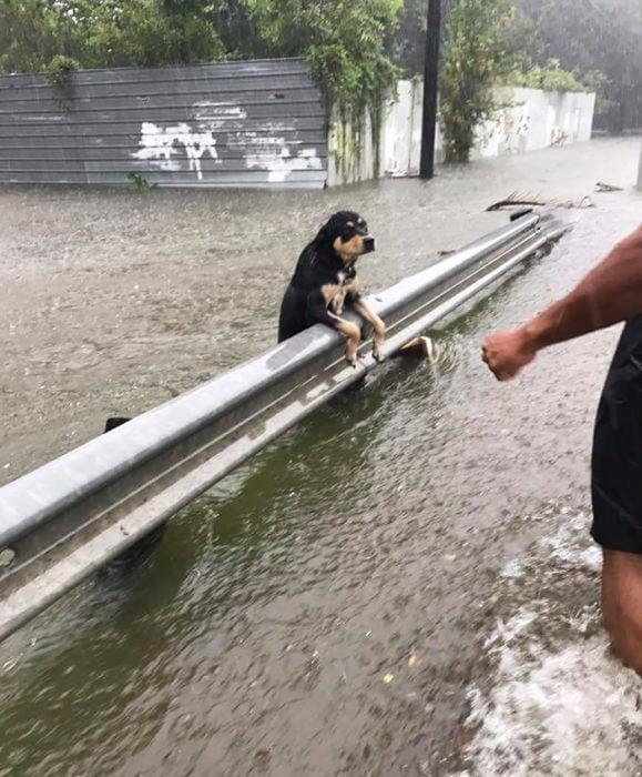 perrito ahogándose inundación harvey
