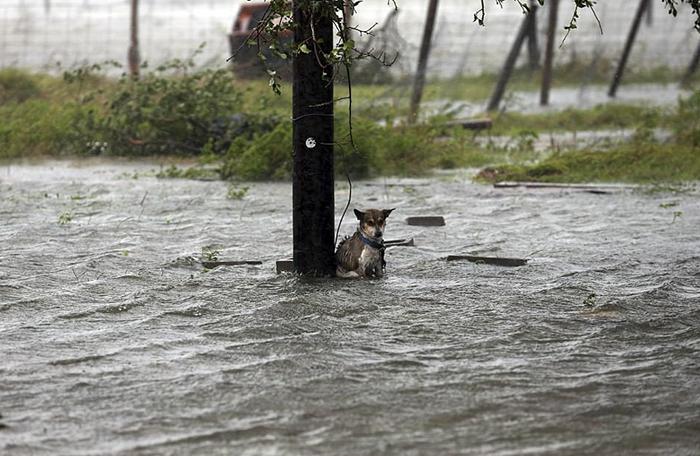 perro nadando agua