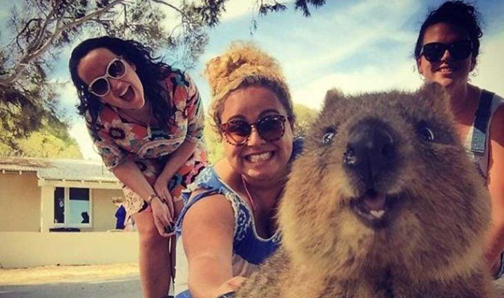 Australia animales tiernos