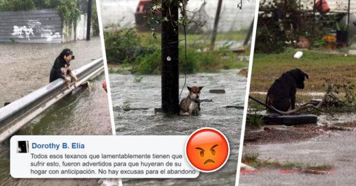 Cover Abandonaron a sus perritos tras el paso del Huracan Harvey