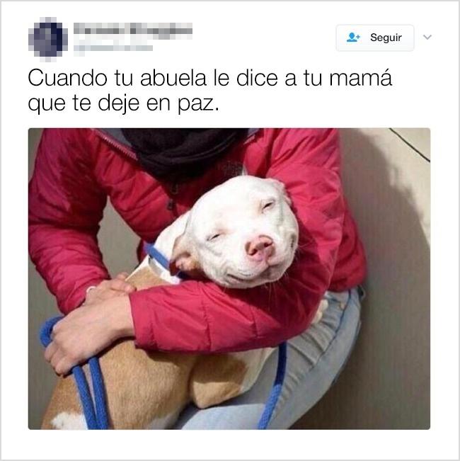 abuela mamá perro sonriente