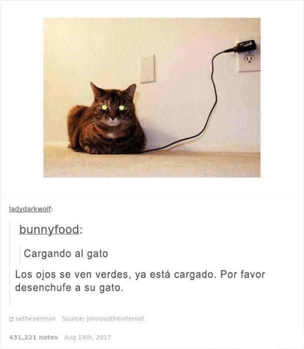 Gato cargado