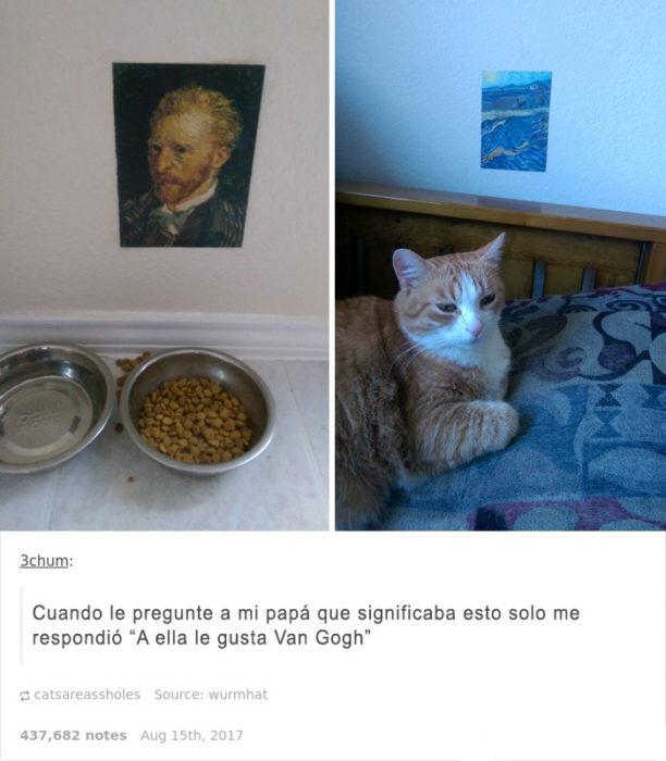 es una gata culta