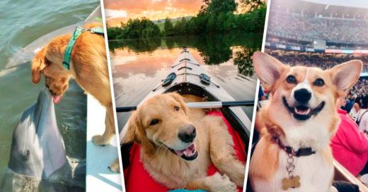 Cover Animales que saben cómo hay que disfrutar de las vacaciones