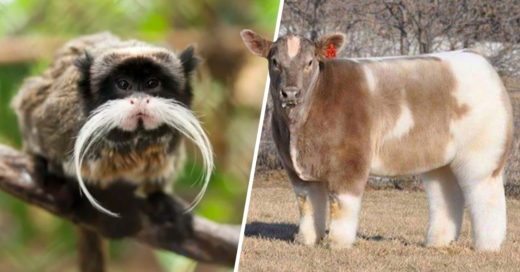 Cover Animales extraños que parecen creados en Photoshop