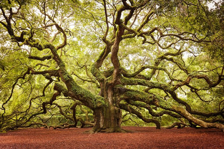 Árboles asombrosos Recreoviral.com